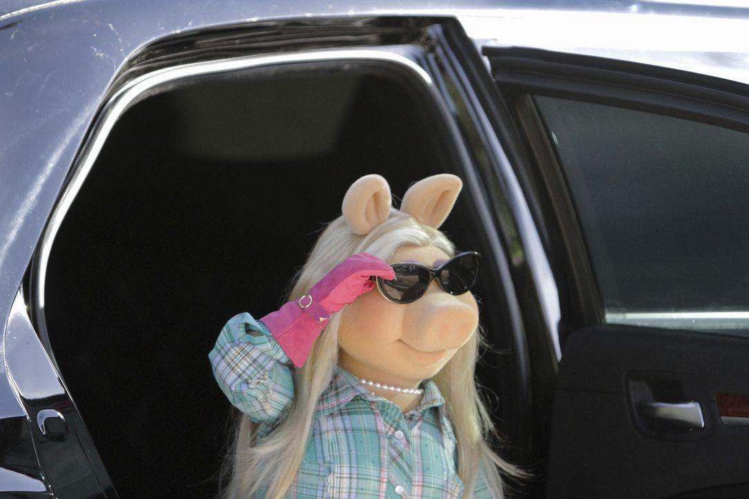 Zwischen Miss Piggy und Reese Witherspoon herrscht dicke Luft, als die beiden sich dann auch noch für dieselbe gemeinnützige Sache engagieren, eskal... - Bildquelle: Andrea McCallin ABC Studios