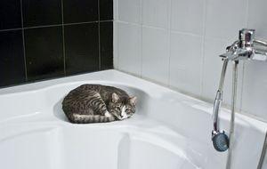 Katze auf Badewannenrand