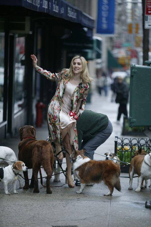 Verwicklungen drohen: Carrie (Sarah Jessica Parker) ... - Bildquelle: Paramount Pictures