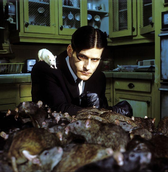 Seit vielen Jahren wird der Außenseiter Willard Stiles (Crispin Glover) von seiner Umgebung gedemütigt und gequält. Eines Tages aber schließt di... - Bildquelle: Warner Bros. GmbH