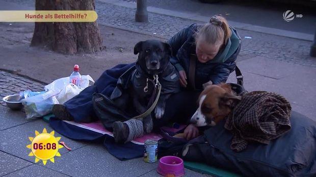 fr hst cksfernsehen video obdachlose mit hunden sat 1. Black Bedroom Furniture Sets. Home Design Ideas