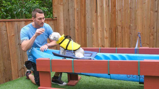 (3. Staffel) - Der Hundetrainer Brandon McMillan hat es sich zur Aufgabe gema...