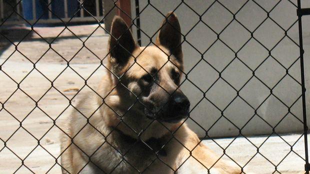 Tierliebhaberin Edie Adler kann einfach an keinem verlassenen Hund oder verle...