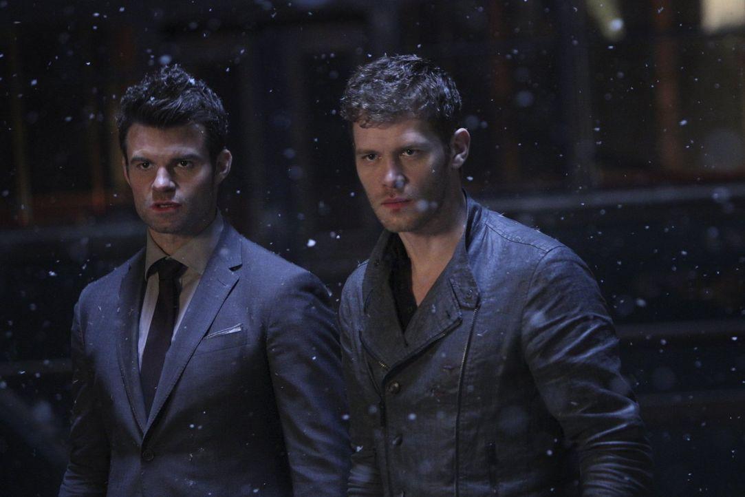 Während Klaus (Joseph Morgan, r.) nur den Sieg vor Augen hat, spielen für Elijah (Daniel Gillies, l.) auch die Menschen eine Rolle, die auf dem Weg... - Bildquelle: Warner Bros. Entertainment, Inc