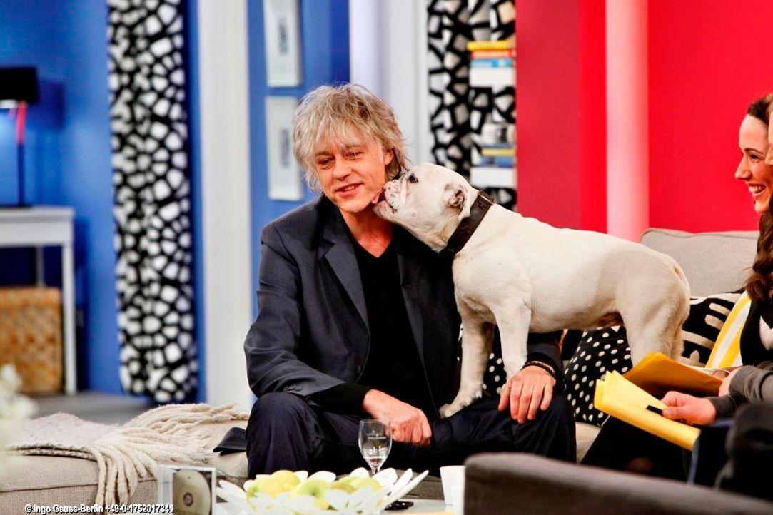 fruehstuecksfernsehen-studiohund-lotte-in-action-im-studio-114