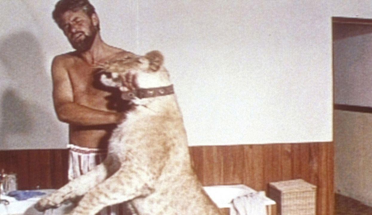 Zwischen George (Bill Travers) und der Löwin Elsa entwickelt sich eine innige Freundschaft. - Bildquelle: 1965, renewed 1993 Columbia Pictures Industries, Inc. All Rights Reserved.