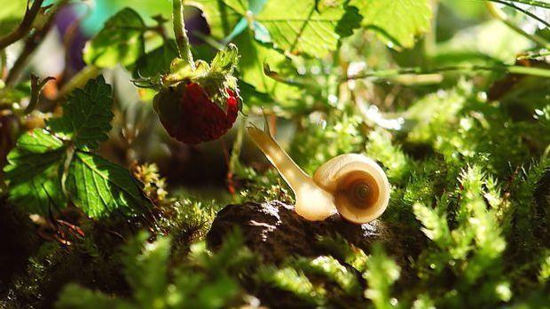 Schattengarten-pixabay