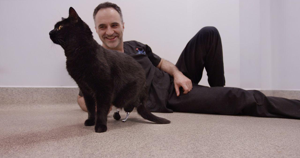 Eine Katze mit nur noch zwei Pfoten? Noel Fitzpatrick kann ihr dank modernster Prothesen wieder ein relativ normales Leben schenken ... - Bildquelle: Zodiak Rights 2015