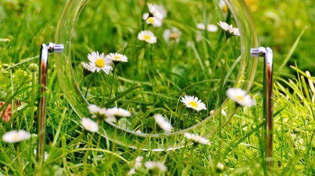 Blumen spiegeln sich in einem Spiegel