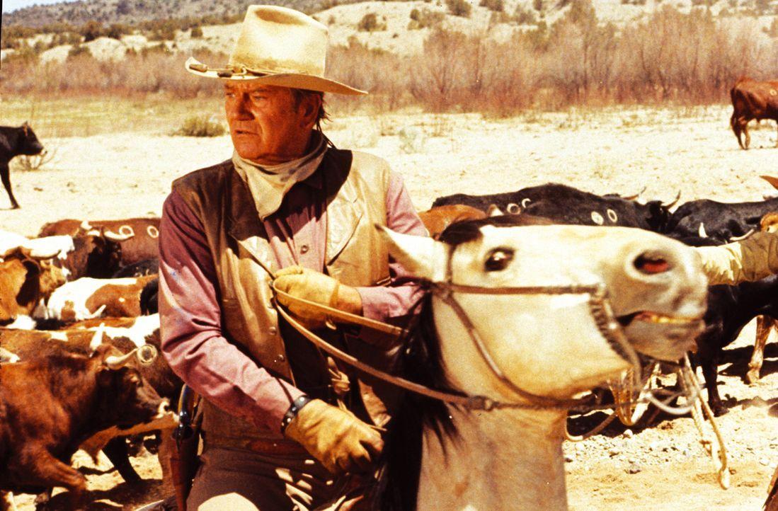 Ausgerechnet kurz vor dem jährlichen Viehtrieb nach Belle Fourche laufen Rancher Wil Andersen (John Wayne) die Treiber weg, weil in der Nähe ein G... - Bildquelle: Warner Bros.