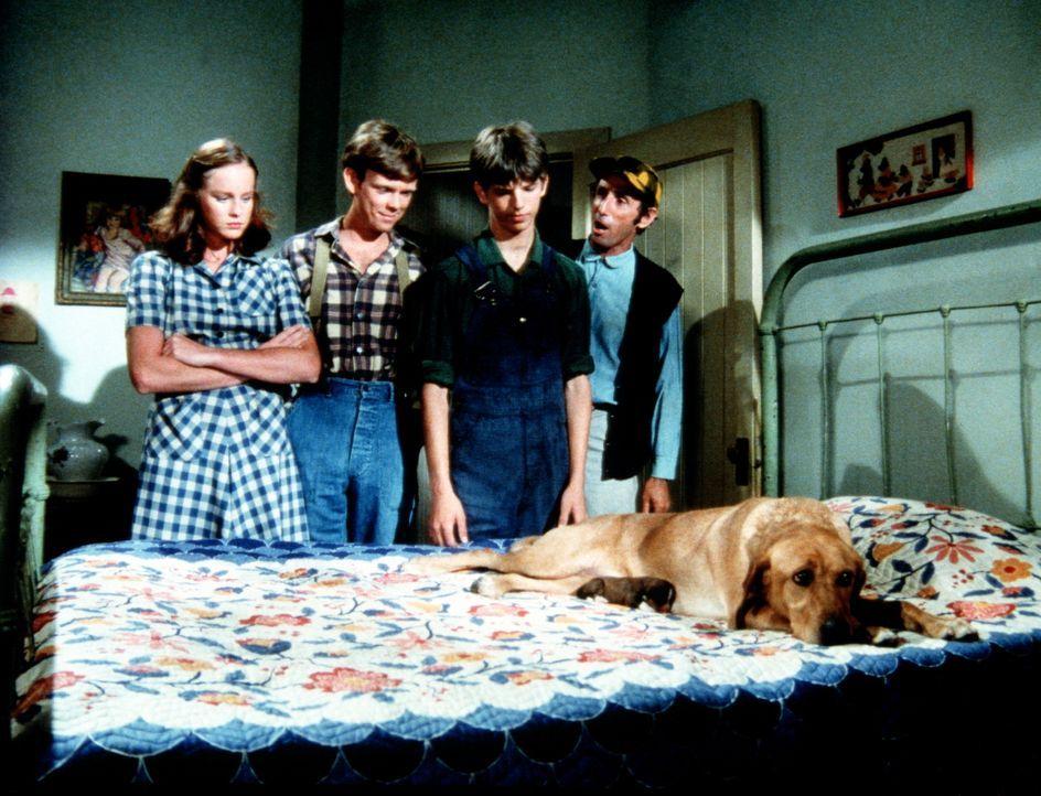 Reckless hat Junge geworfen. Erin (Mary Beth McDonough, l.), Ben (Eric Scott, 2.v.l.) und Jim (David W. Harper, 2.v.r.) betrachten die kleinen Welpe... - Bildquelle: WARNER BROS. INTERNATIONAL TELEVISION