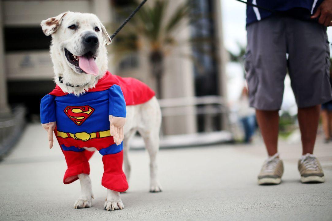 Hund in Superman-Verkleidung - Bildquelle: getty-AFP