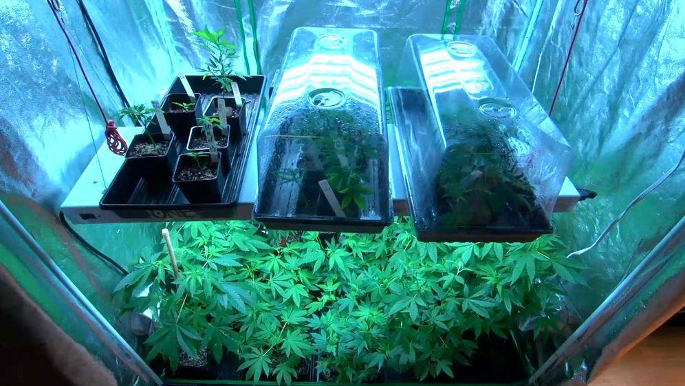 Colorado im Cannabisrausch