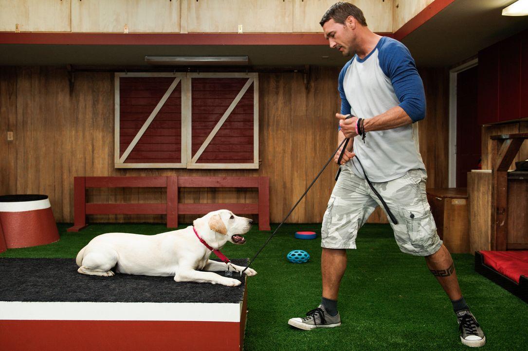 (2. Staffel) - Ungeliebt, nicht vermittelbar, aggressiv, verhaltensgestört - Hundetrainer Brandon McMillan gibt genau solchen Hunden ein sicheres Zu... - Bildquelle: 2013 Jaime Klein