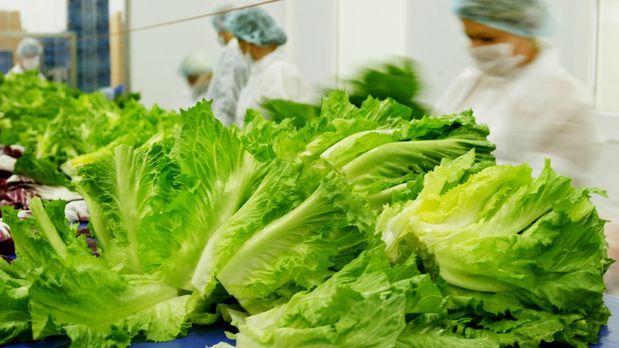 wintergemuese-endivien-salat-03-10-30-dpa - Bildquelle: dpa