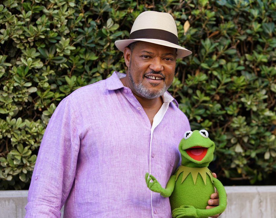 Wird Kermit (r.) Laurence Fishburne (l.) für Miss Piggys Show gewinnen können? - Bildquelle: Andrea McCallin ABC Studios