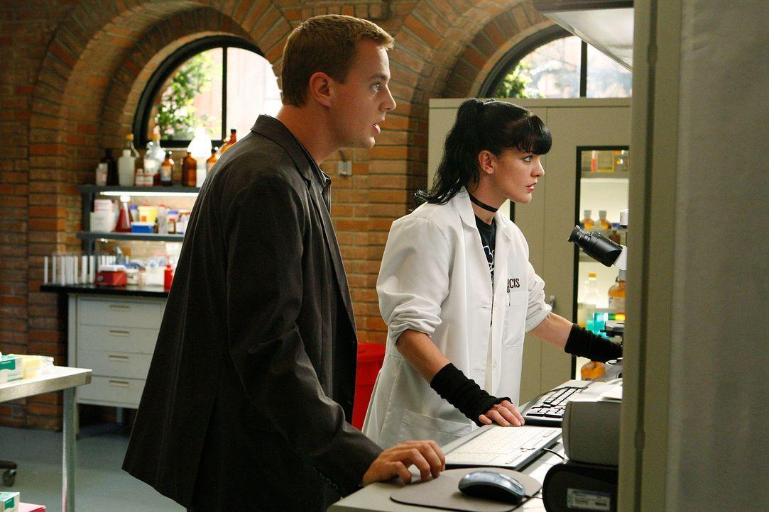 Ermitteln in einem neuen Mordfall: Abby (Pauley Perrette, r.) und McGee (Sean Murray, l.) ... - Bildquelle: CBS Television