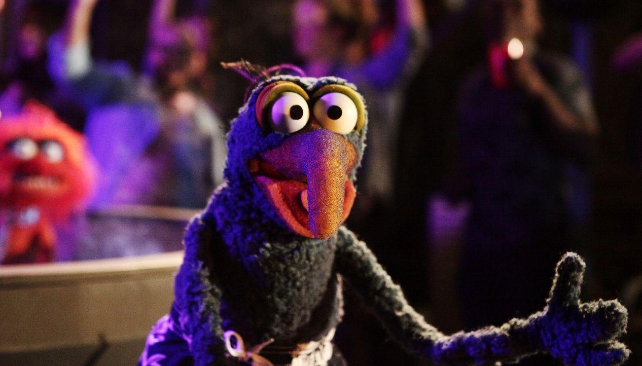 Gonzo vermisst seine Freundin Camilla. Um nicht alleine zu sein, zieht er bei Pepe und Rizzo ein ... - Bildquelle: Nicole Wilder ABC Studios