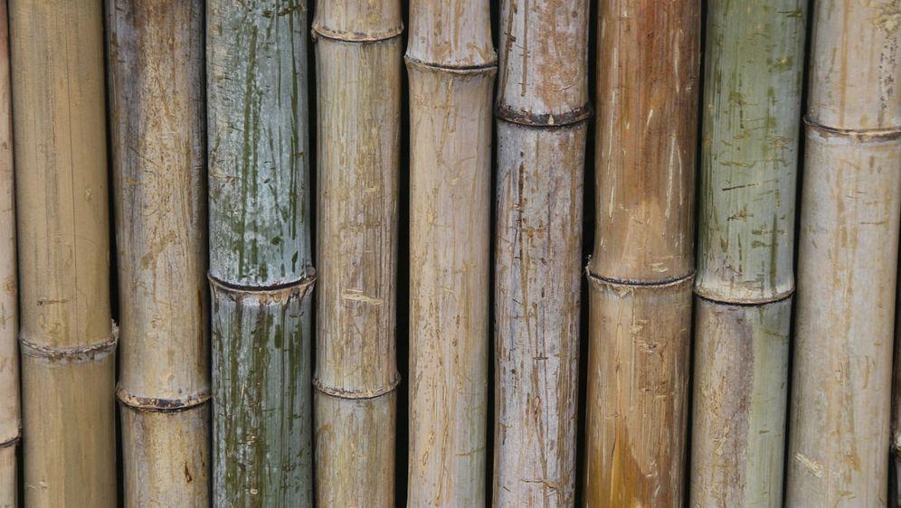 Bambus Kaufen Und Pflanzen Infos Sat 1 Ratgeber