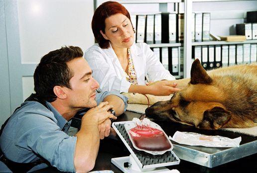 Rex spendet unter den wachsamen Augen der Tierärztin (Katrin Reisinger, r.) u...