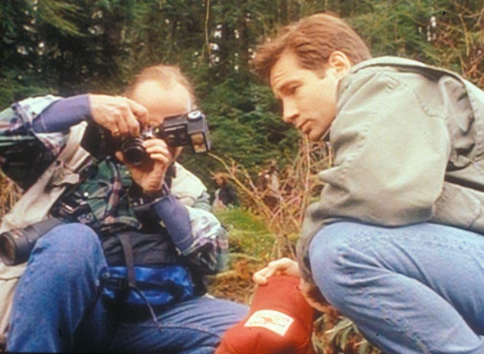 Fox Mulder (David Duchovny, r.) und der Hobbyfotograf Ansel Bray (R. Nelson Brown, l.) betrachten Spuren, die von einem Seeungeheuer stammen sollen. - Bildquelle: TM +   Twentieth Century Fox Film Corporation. All Rights Reserved.