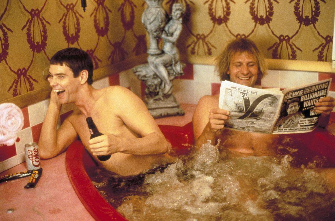 """Llyod (Jim Carrey, l.) und Harry (Jeff Daniels, r.) träumen von einem eigenen Tierladen, der """"Ich hab Würmer"""" heißen soll. Da die beiden Chaoten jed... - Bildquelle: New Line Cinema"""