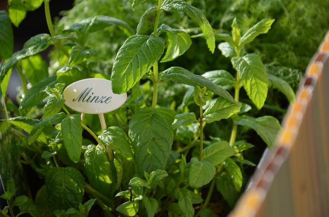 Tipp 1: Kräutergarten pflanzen!Ob im Garten oder auf dem Balkon: Pflanzt eur...
