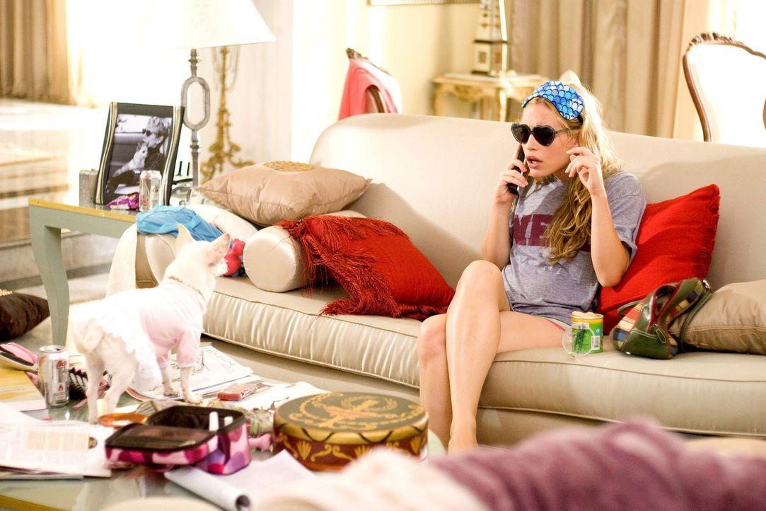 Chloe (l.) ist eine verwöhnte Chihuahua-Dame, die in Beverly Hills bei ihrer Besitzerin im Luxus lebt. Als diese plötzlich verreisen muss, soll si... - Bildquelle: Disney Enterprises, Inc.  All rights reserved
