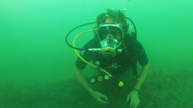 Josh geht diesmal auf Tauchgang: Im Lajas-Riff vor der Küste Pananmas fanden...