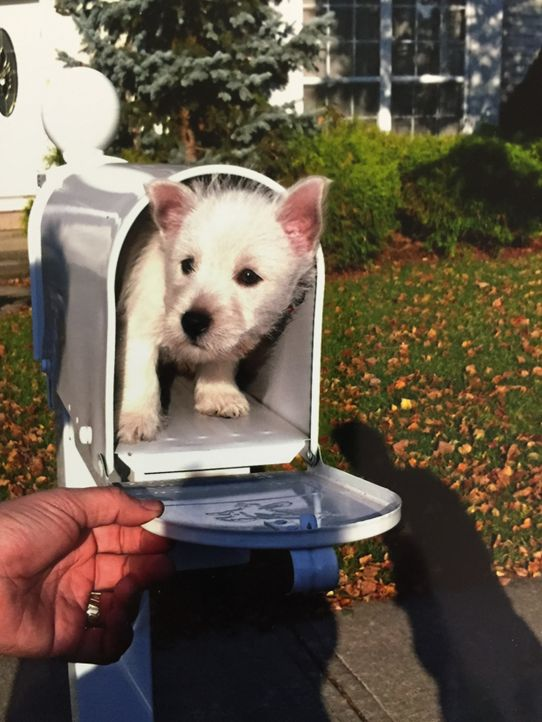 Welpe im Briefkasten - Bildquelle: Imgur