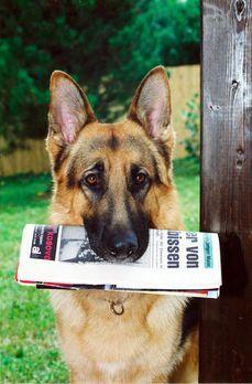 Kommissar Rex - Rex bringt die Morgenzeitung mit einer ungewöhnlichen Meldung...