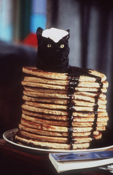 Sabrina denkt nur noch an Pfannkuchen, und das tellerweise. Salem hat darunter sehr zu leiden. - Bildquelle: Paramount Pictures