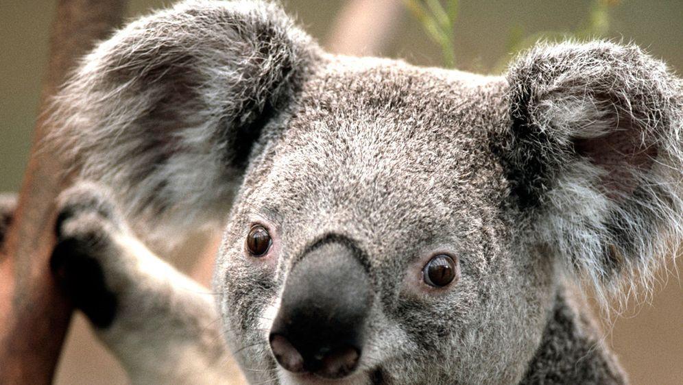 Big Brother Australien ist startklar!