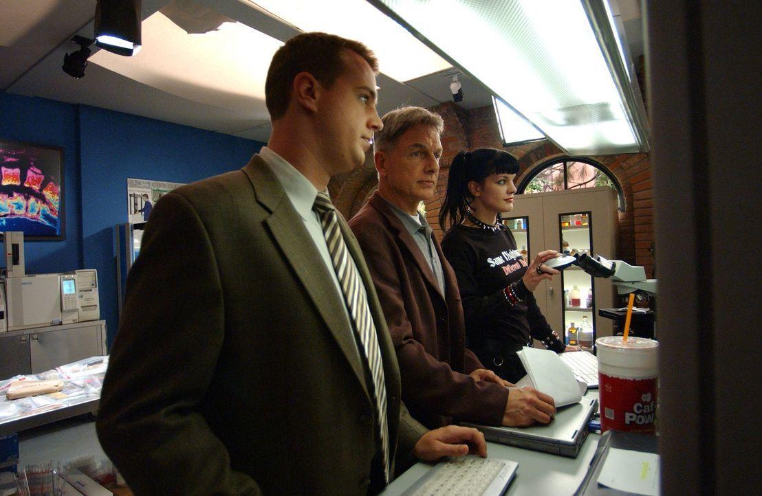 McGee (Sean Murray, l.), Gibbs (Mark Harmon, M.) und Abby (Pauley Perette, r.) arbeiten an einem neuen Fall ... - Bildquelle: CBS Television