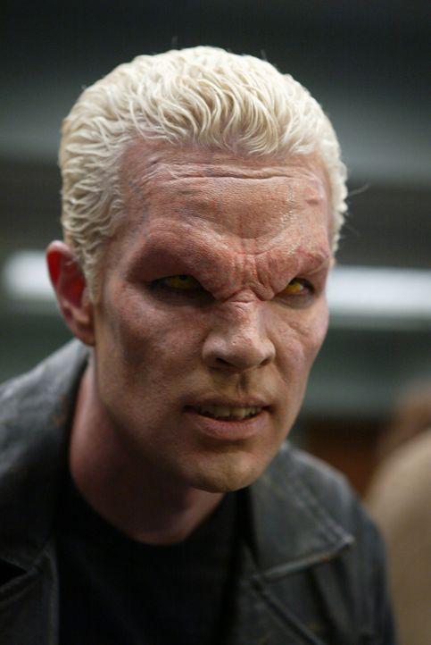 Spike (James Marsters) ist aufgetaucht, aber es gibt keine Erklärung dafür. Er ist ein Geist und irgendwie an das Amulett gebunden, aus dem er gekom... - Bildquelle: The WB Television Network