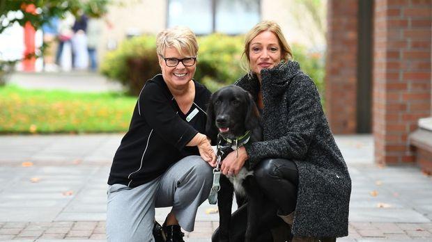 Projekt Superhund - Helfer Auf Vier Pfoten - Projekt Superhund - Helfer Auf Vier Pfoten - Energiebündel Nero Soll Silvia Den Alltag Erleichtern
