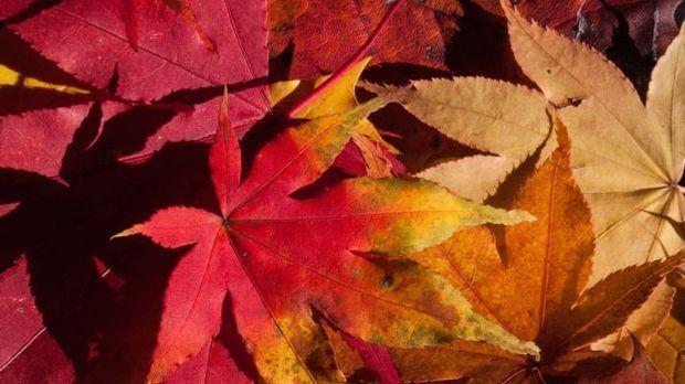 Laub-Herbst-rot-pixabay