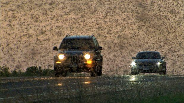 Superswarm - Selbst von dem riesigen Schwarm Maifliegen dürfen sich die Autof...