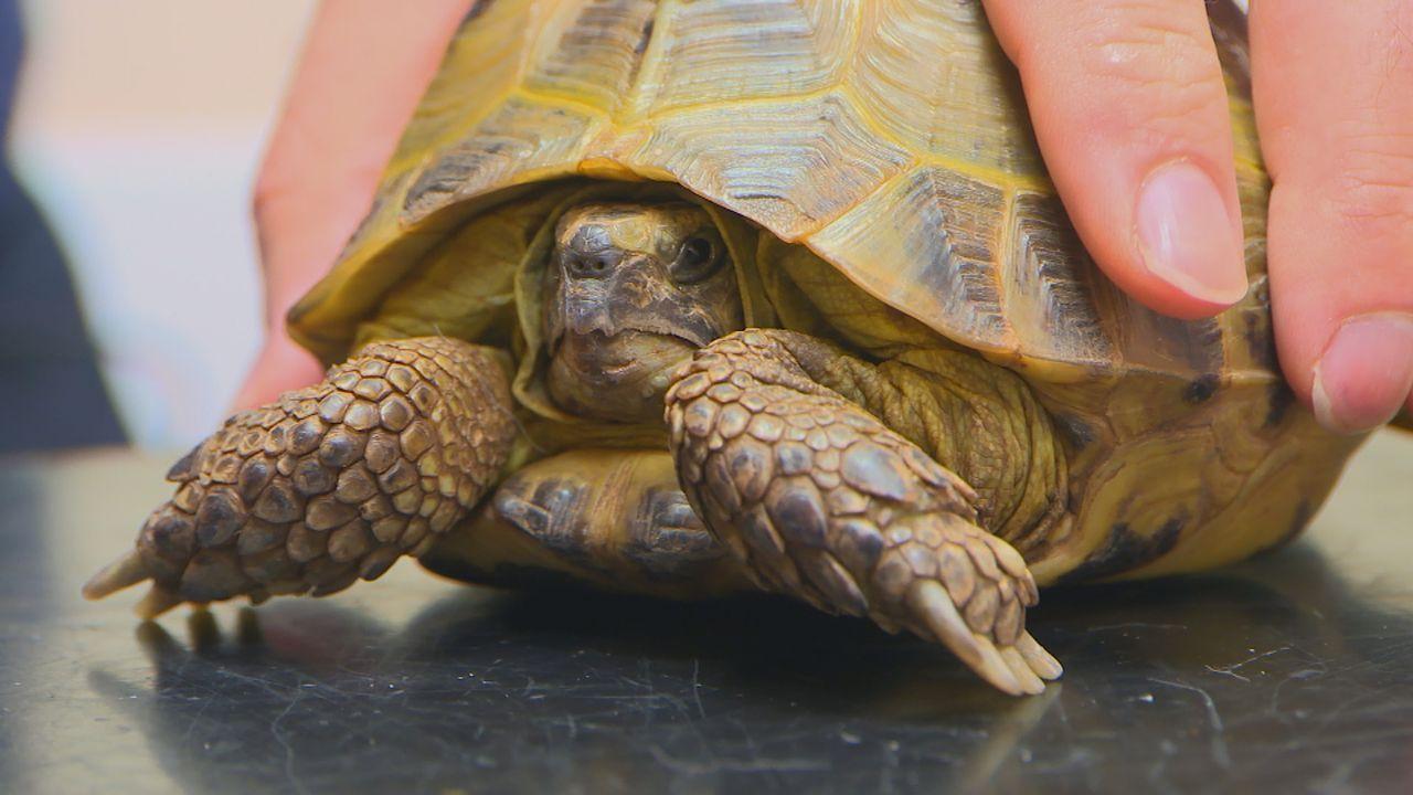 Die schlaflose Schildkröte - Bildquelle: True North