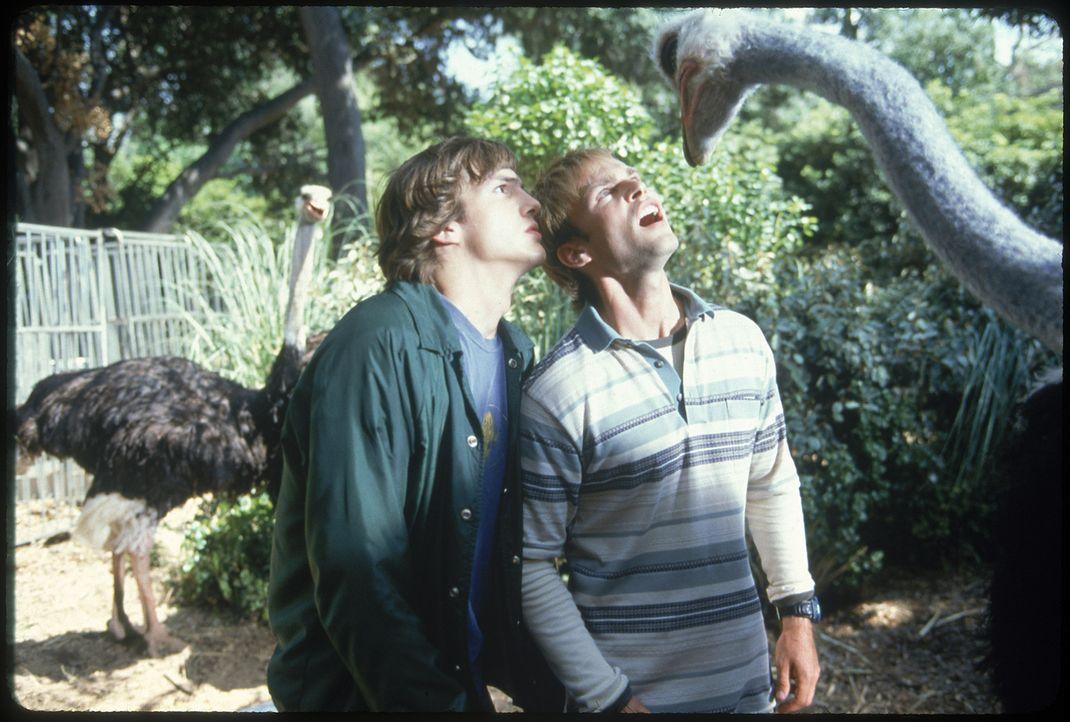 Auf der Suche nach ihrem Auto werden Jesse (Ashton Kutcher, l.) und Chester (Seann William Scott, r.) nicht nur von heißen Spacegirls, abgedrehten... - Bildquelle: 2000 - 20th Century Fox - All Rights Reserved.