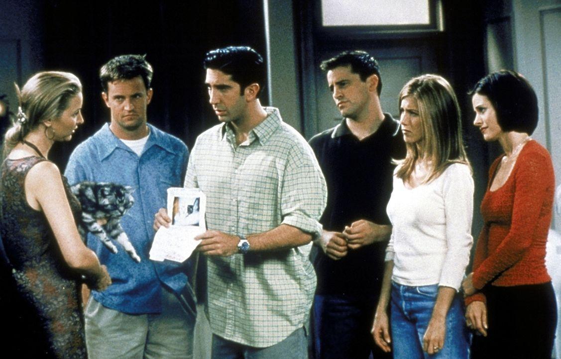 Nur zusammen finden Chandler (Matthew Perry, 2.v.l.), Ross (David Schwimmer, 3.v.l.), Joey (Matt LeBlanc, 3.v.r.), Rachel (Jennifer Aniston, 2.v.r.)... - Bildquelle: TM+  2000 WARNER BROS.