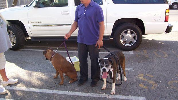 Der Hundeflüsterer Cesar Millan hilft heute Scott Lincoln und seiner Frau, di...