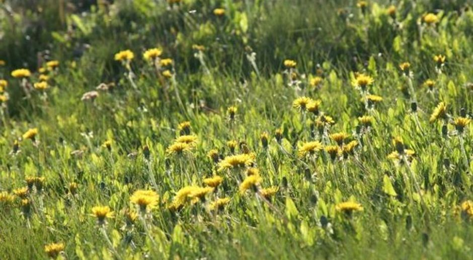 Gelber Rasen: Was tun für frisches Grün? | SAT.1 Ratgeber