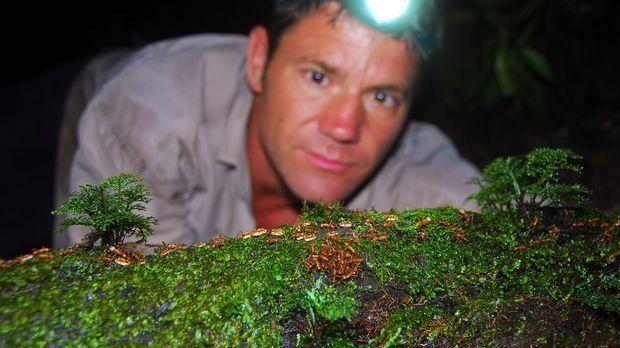 Klein aber gefährlich: Als Steve Backshall auf ein Heer von Ameisen stößt, bi...