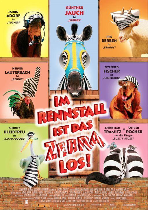 Im Rennstall ist das Zebra los! - Bildquelle: Constantin Film