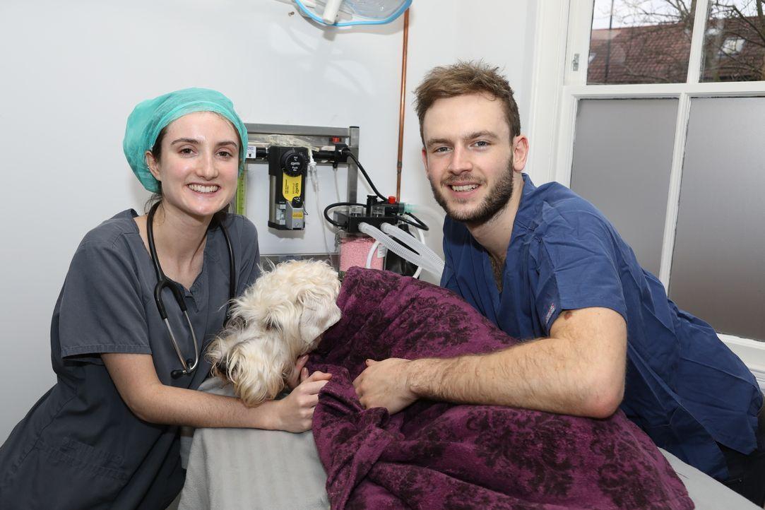 James bereitet sich auf einen außergewöhnlichen Patienten vor. Die Besitzer ... - Bildquelle: True North
