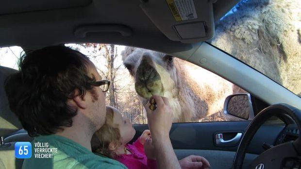 111 - 111- 111 Völlig Verrückte Viecher! Die Witzigsten Tiere Der Welt