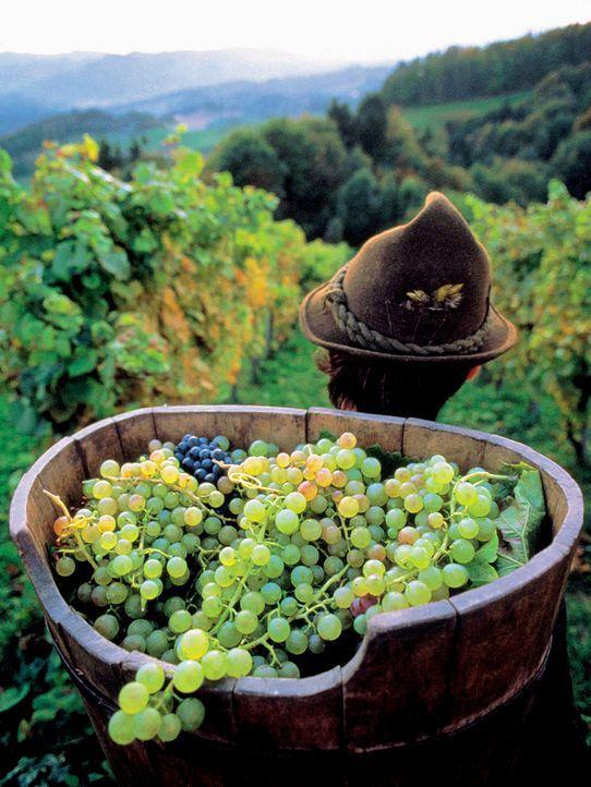 Steiermark - Bildquelle: dpa/gms