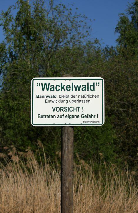 Wackelwald - Bildquelle: Pitopia