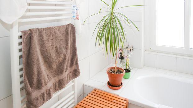 pflanzen f rs bad sat 1 ratgeber. Black Bedroom Furniture Sets. Home Design Ideas